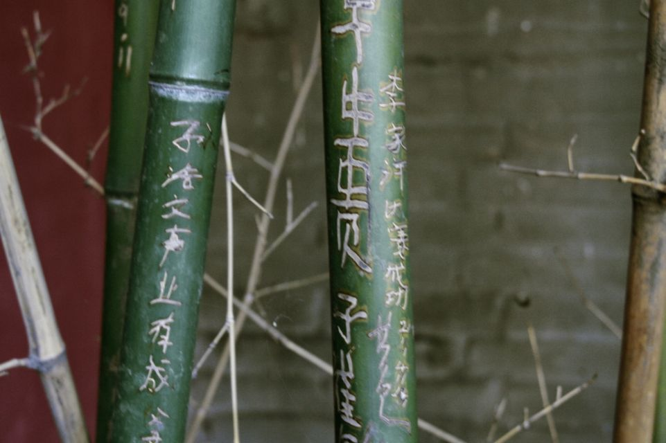 China,Peking,Bambus