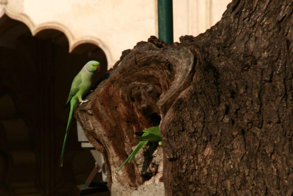 Vogel,Indien