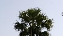 Bild am 2008-09-27