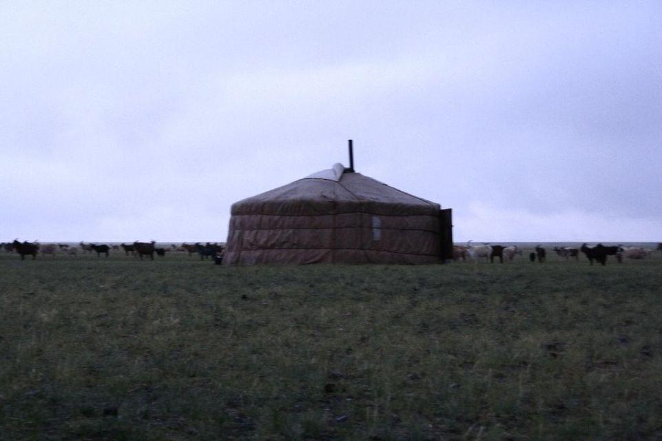 Mongolei,Ziege,Regen