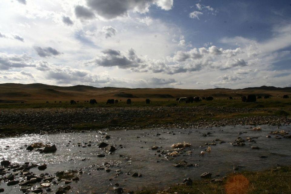 Mongolei,Yak