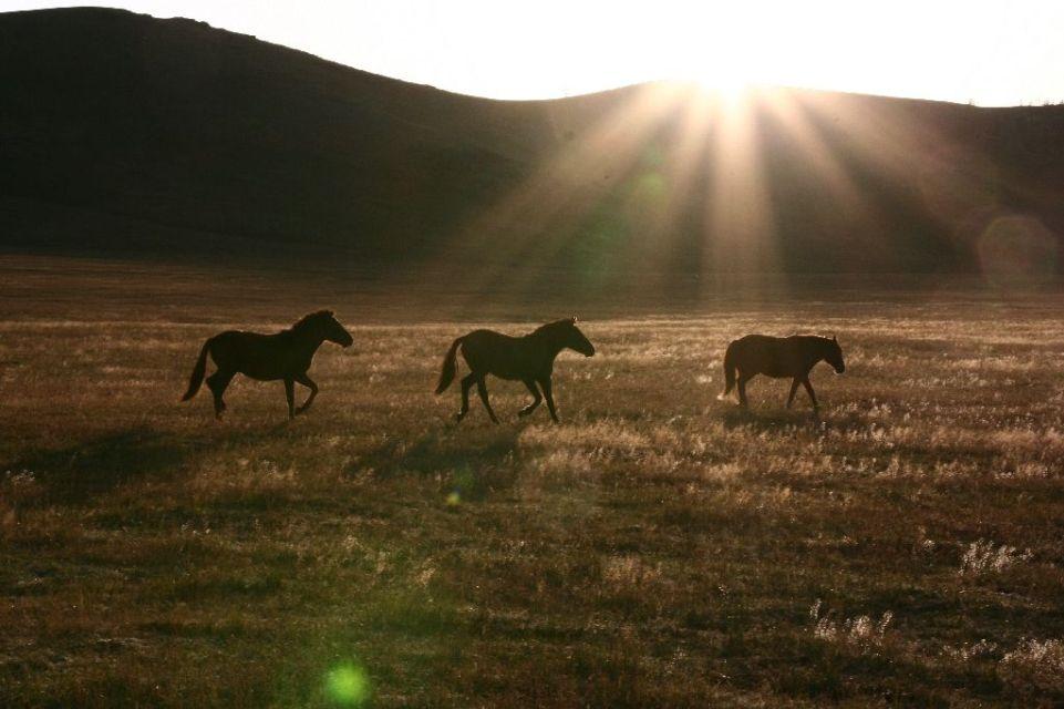 Mongolei,Pferd