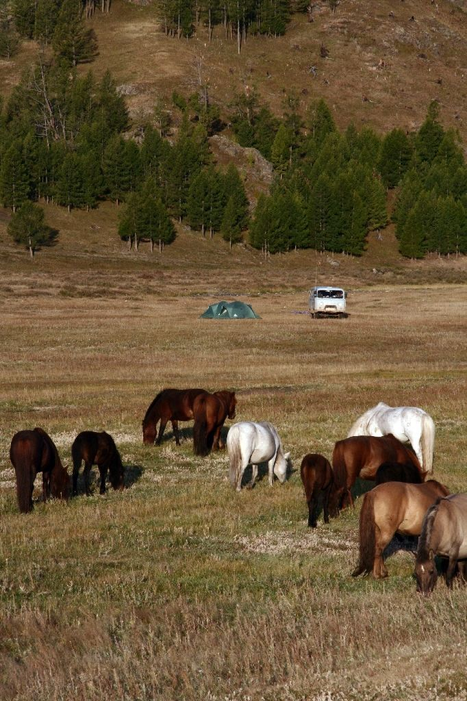 Mongolei,Zelt