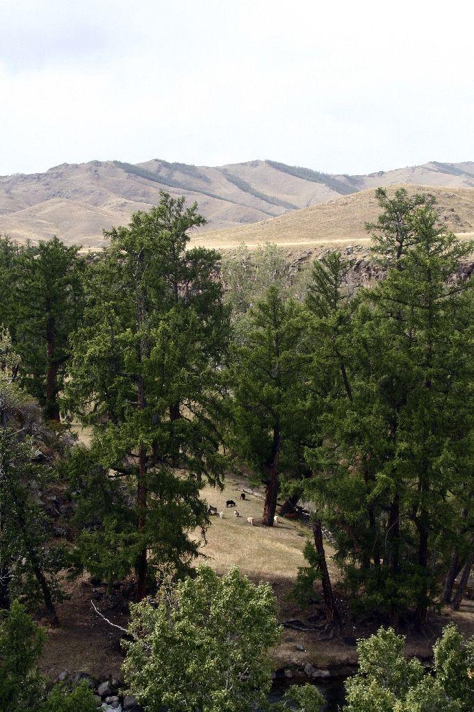 Mongolei,Wald