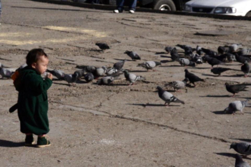 Mongolei,Ulan Bator,Kinder,Taube