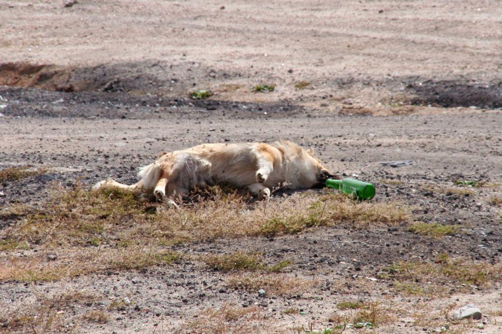 Baikalsee,Hund,Russland