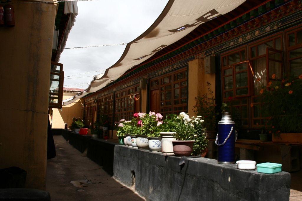 Blumen,Lhasa,Jokhang,Tibet
