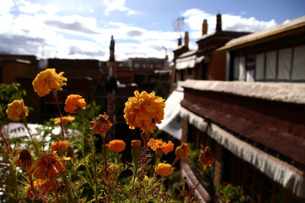 Blumen,Lhasa,Tibet